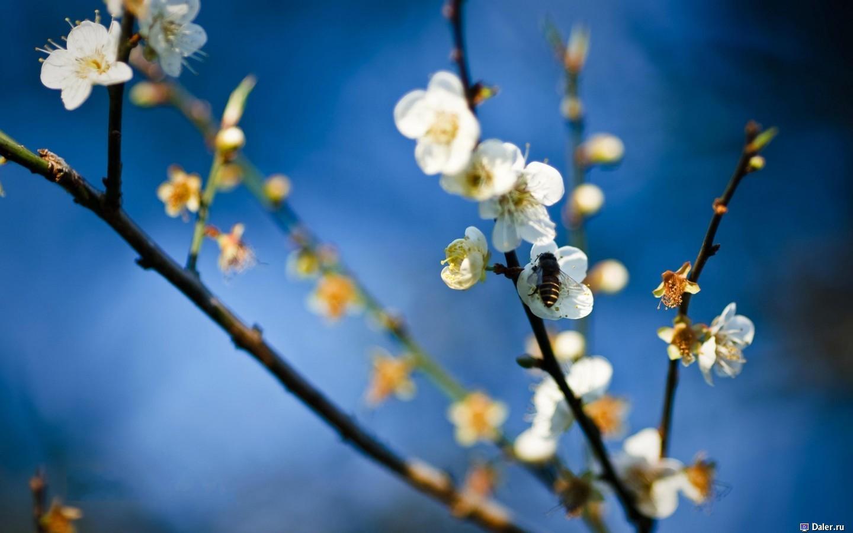 9163 скачать обои Растения, Цветы - заставки и картинки бесплатно