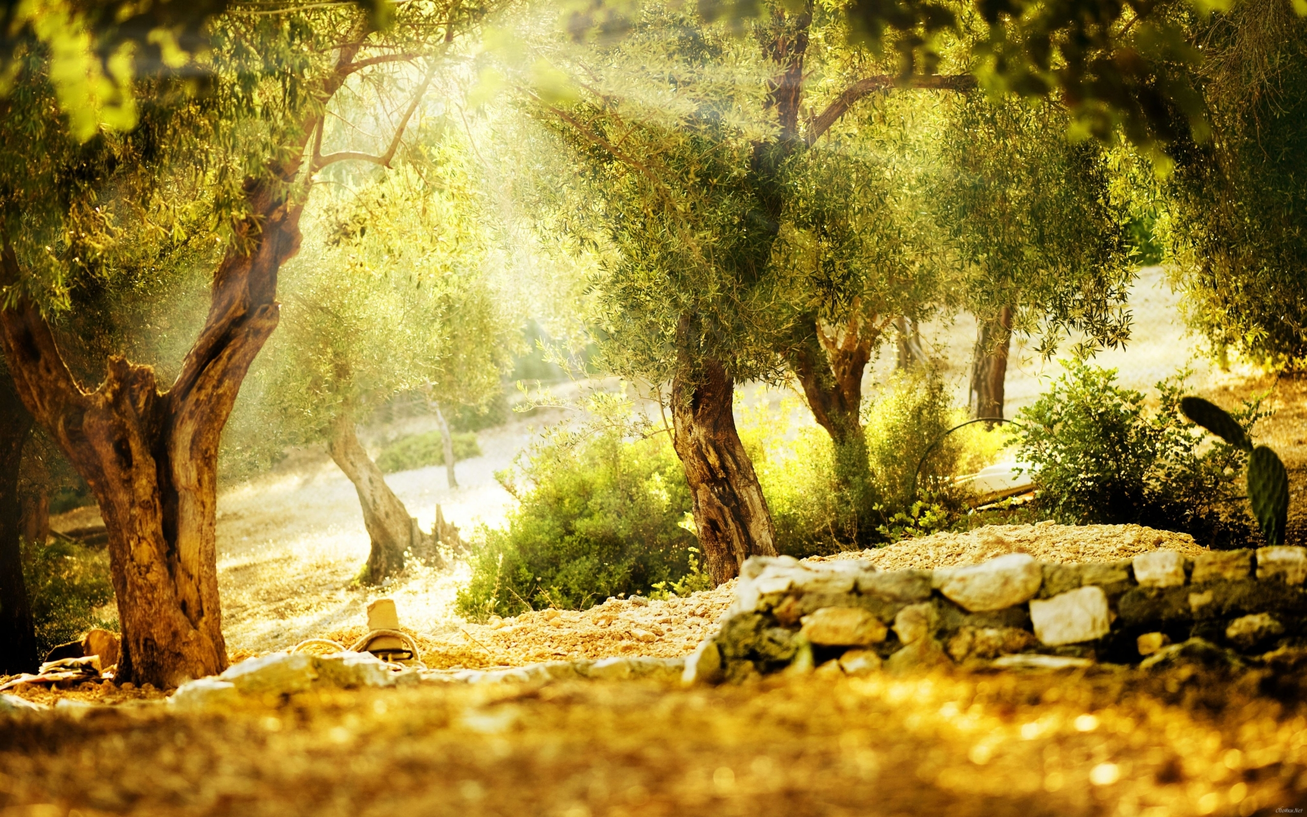 26417 download wallpaper Landscape, Trees, Sun screensavers and pictures for free