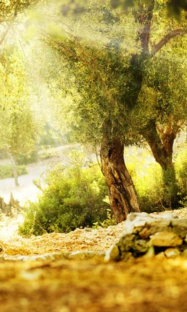 26417 скачать обои Пейзаж, Деревья, Солнце - заставки и картинки бесплатно