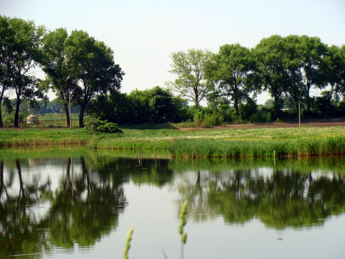 24100 скачать обои Пейзаж, Река, Деревья - заставки и картинки бесплатно