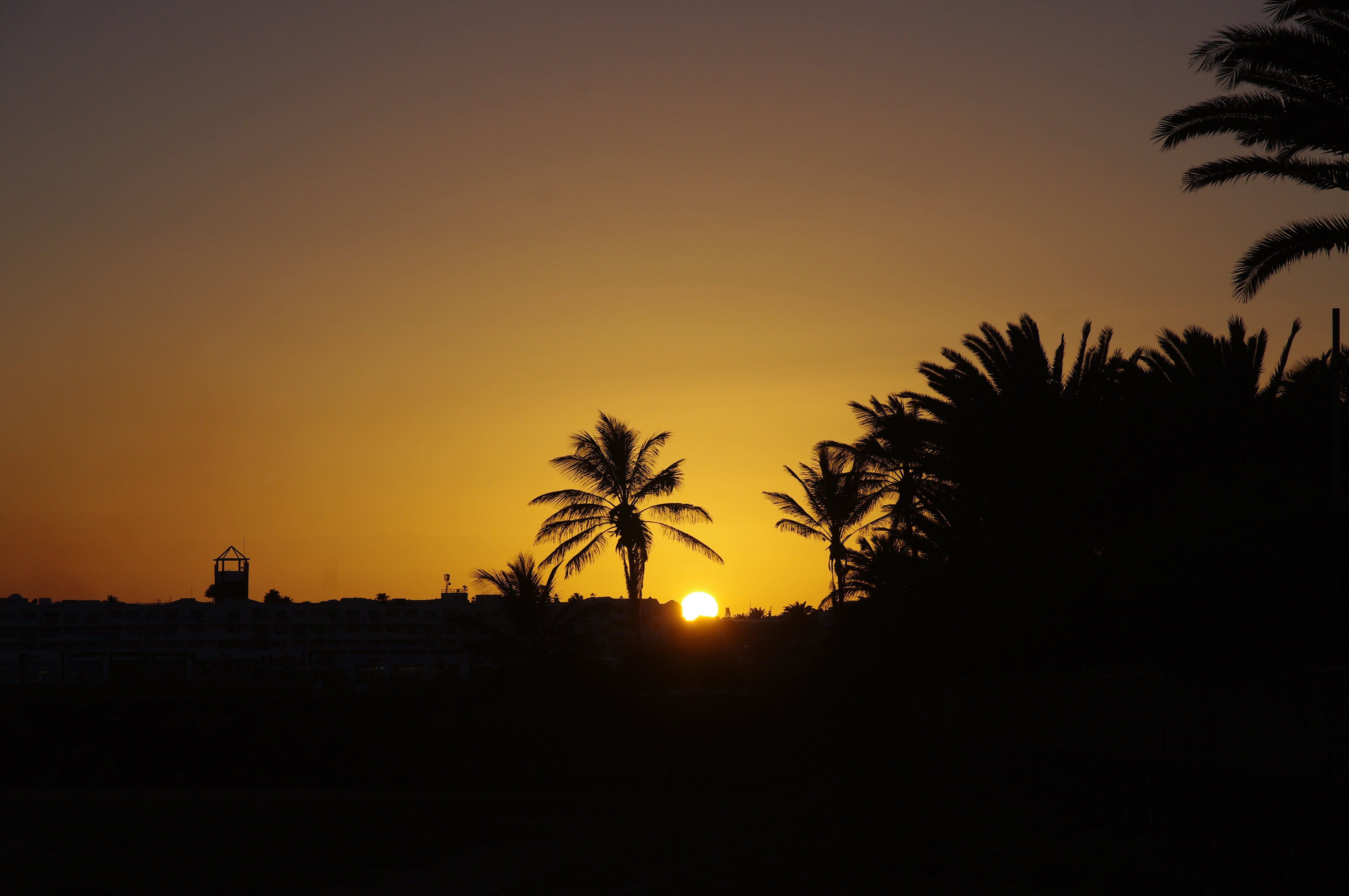100650 download wallpaper Nature, Sunset, Silhouette, Sun, Palms screensavers and pictures for free