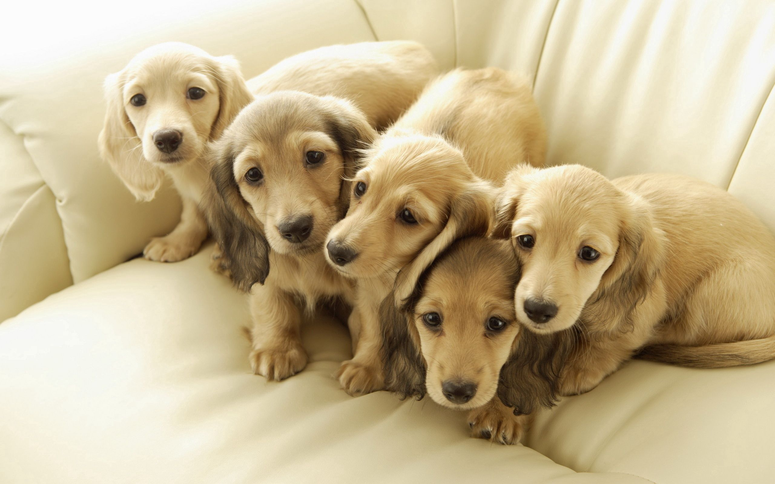 110761 download wallpaper Animals, Dogs, Friends, Puppies screensavers and pictures for free