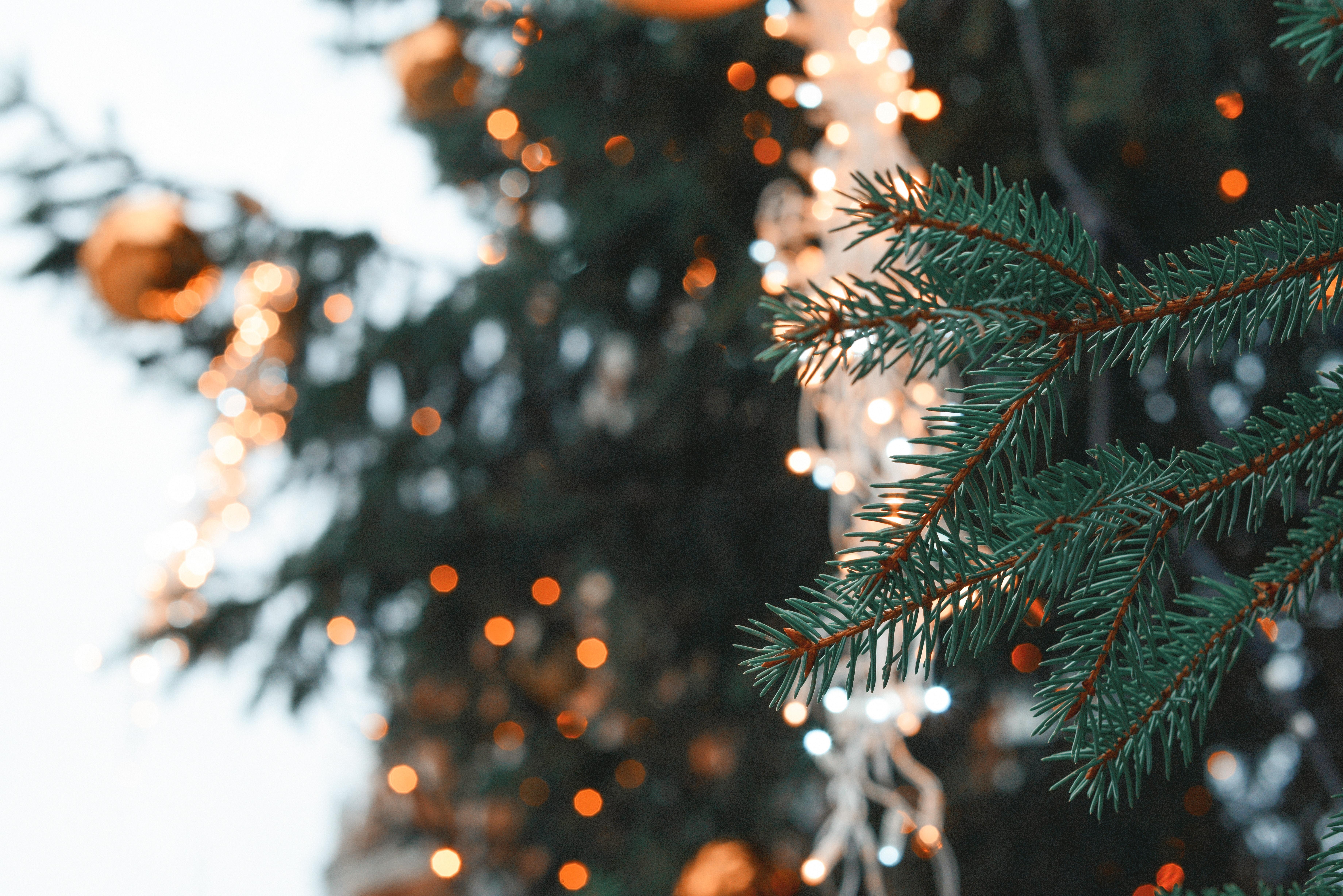 70516 Salvapantallas y fondos de pantalla Año Nuevo en tu teléfono. Descarga imágenes de Naturaleza, Abeto, Rama, Aguja, Navidad, Año Nuevo, Destello, Deslumbramiento gratis