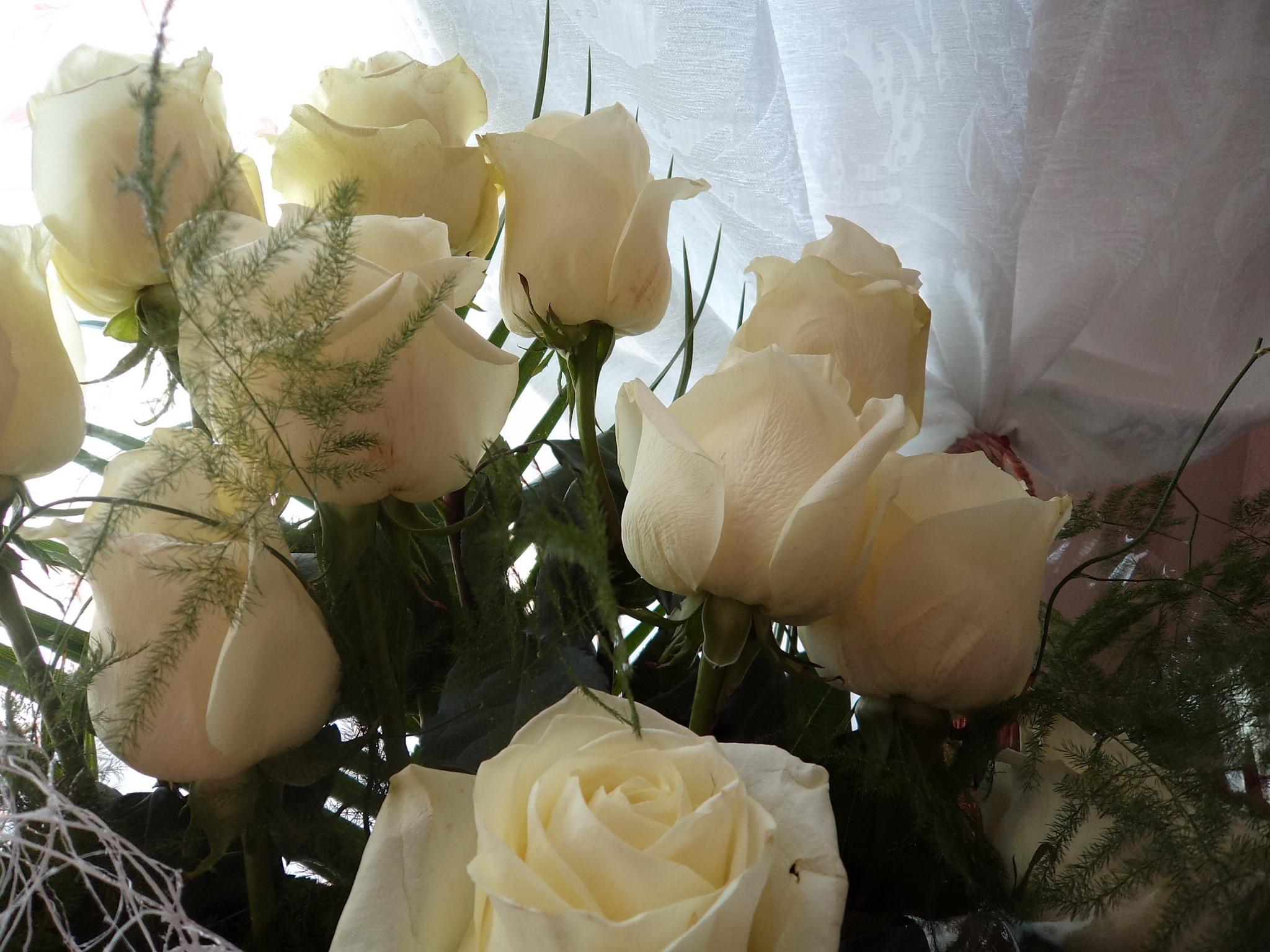 124619 скачать обои Розы, Букет, Цветы, Белый - заставки и картинки бесплатно
