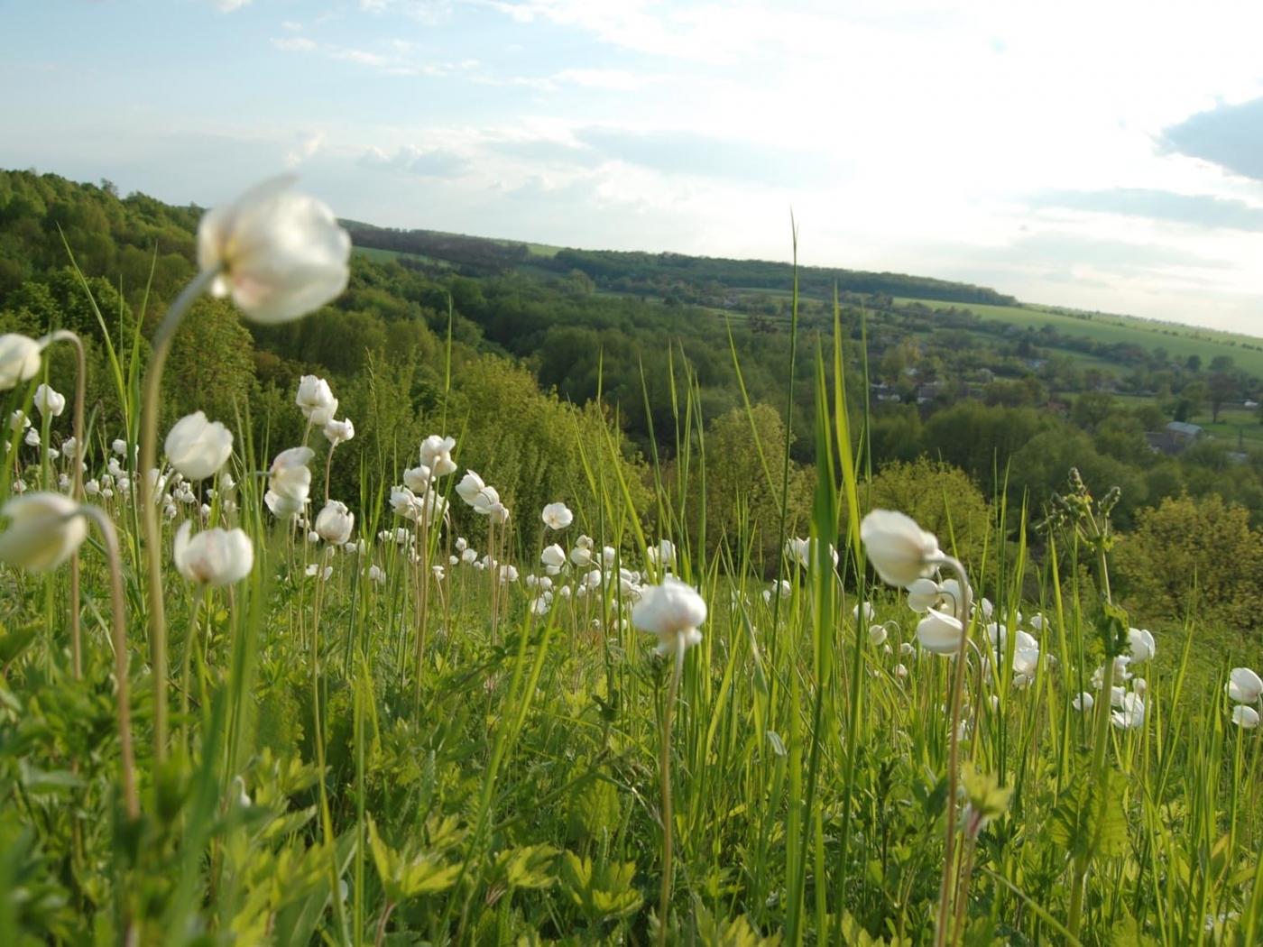 1401 скачать обои Растения, Пейзаж, Цветы, Трава - заставки и картинки бесплатно