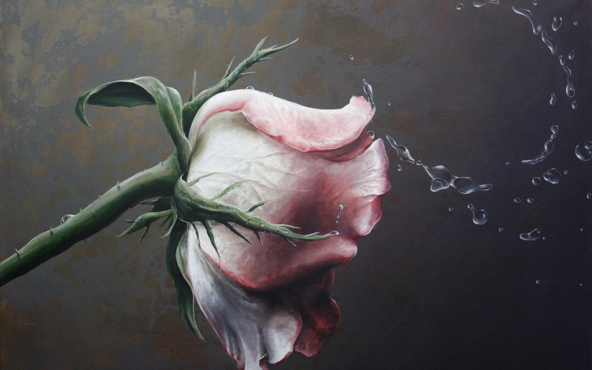 Handy-Wallpaper Blumen, Roses, Bilder kostenlos herunterladen.