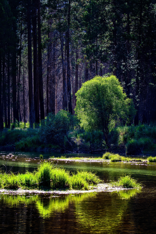 118462 скачать обои Природа, Деревья, Река, Трава, Лес, Солнечный Свет - заставки и картинки бесплатно