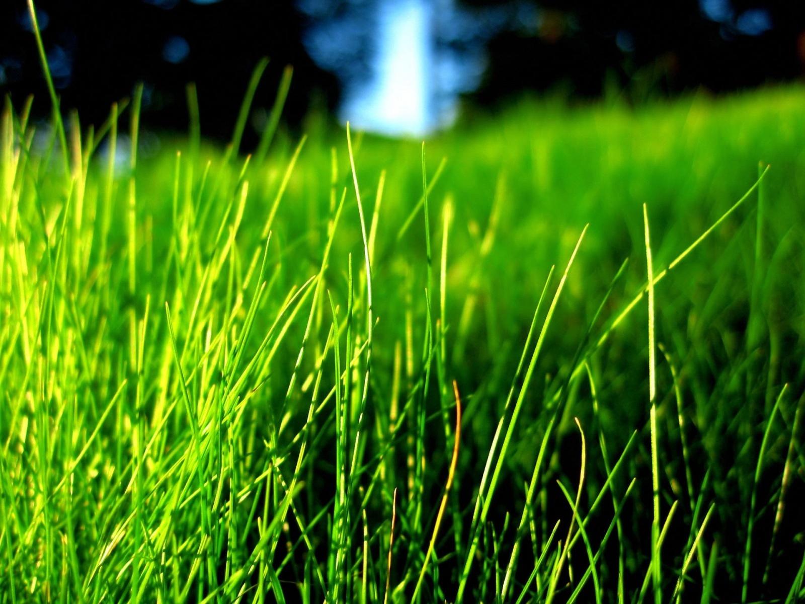 12143 скачать обои Растения, Трава, Фон - заставки и картинки бесплатно