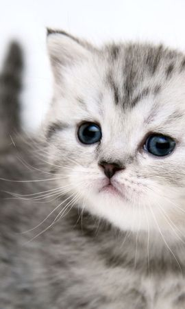 40766 download wallpaper Animals, Cats screensavers and pictures for free