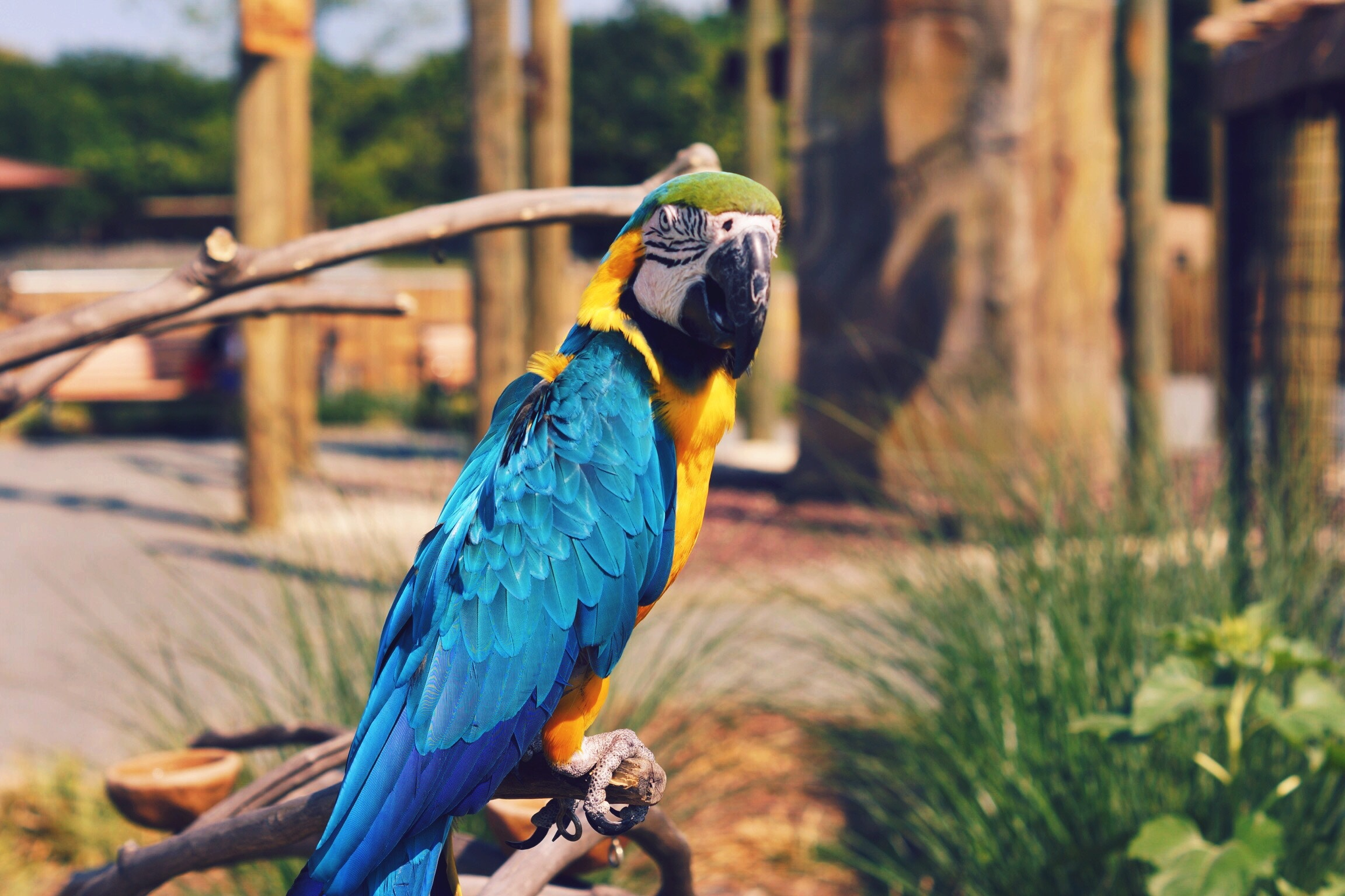 154309 download wallpaper Animals, Parrots, Macaw, Bird, Color screensavers and pictures for free