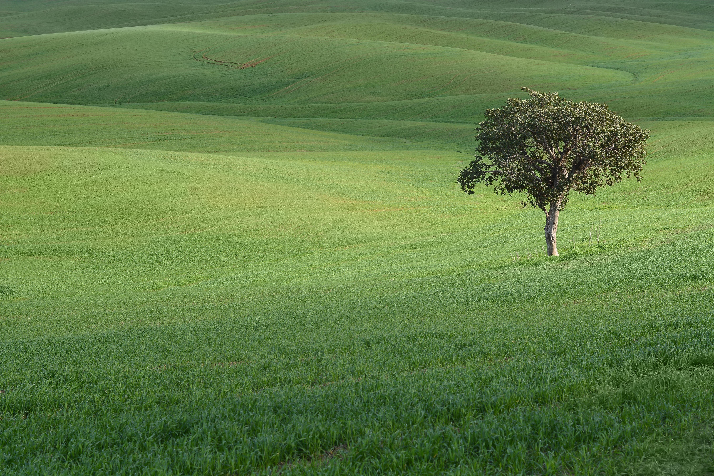 69758 скачать обои Природа, Дерево, Поле, Холмы, Трава, Пейзаж - заставки и картинки бесплатно