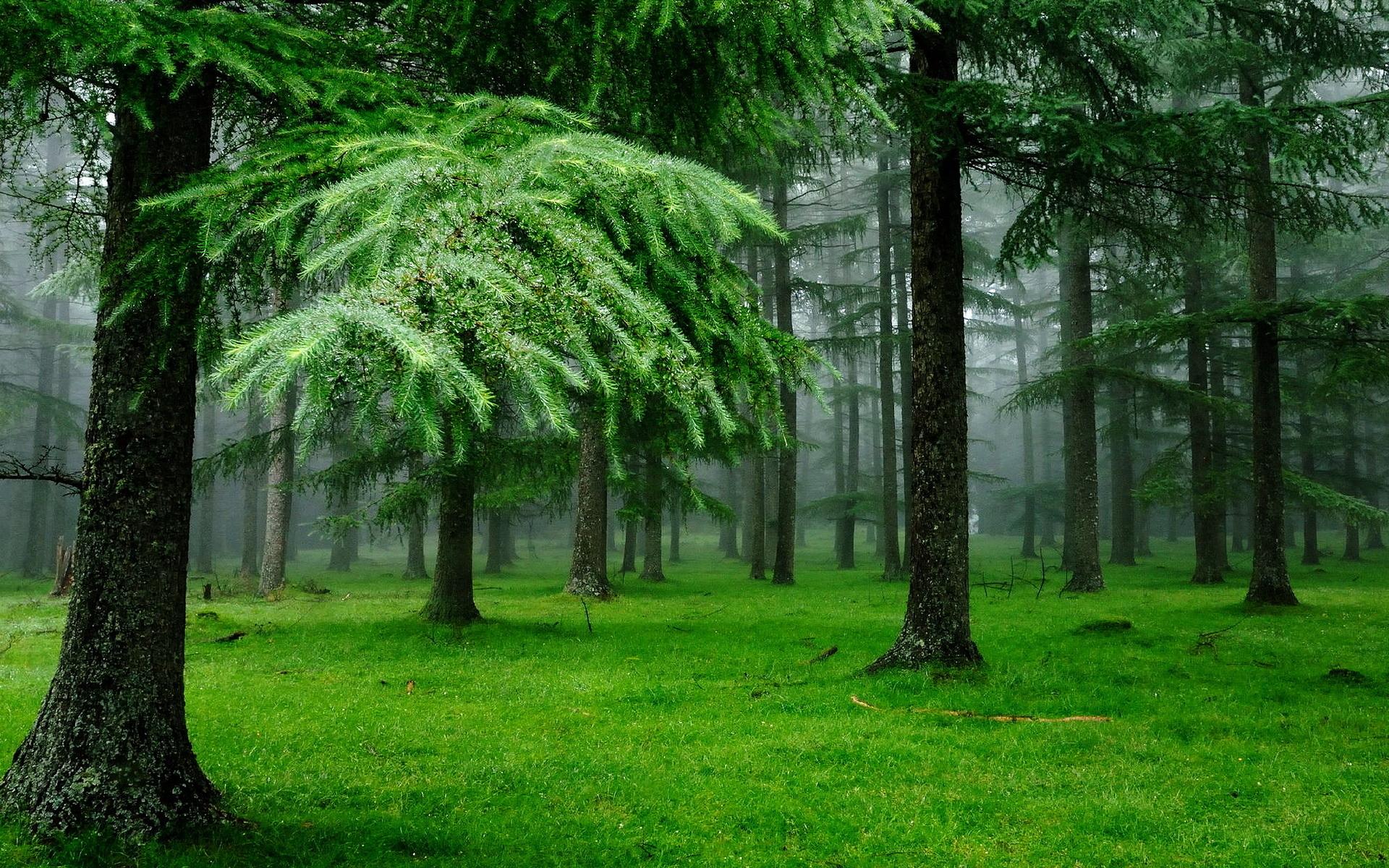 46083 Hintergrundbild herunterladen Landschaft, Pflanzen, Bäume - Bildschirmschoner und Bilder kostenlos