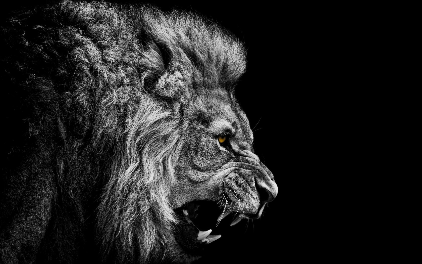 Download mobile wallpaper Animals, Lions for free.