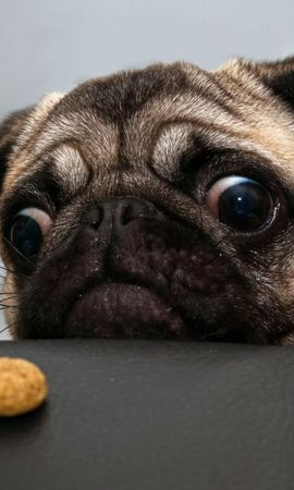 21730 download wallpaper Animals, Dogs screensavers and pictures for free