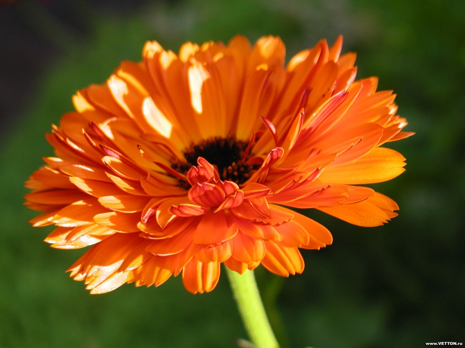 3524 скачать обои Растения, Цветы - заставки и картинки бесплатно