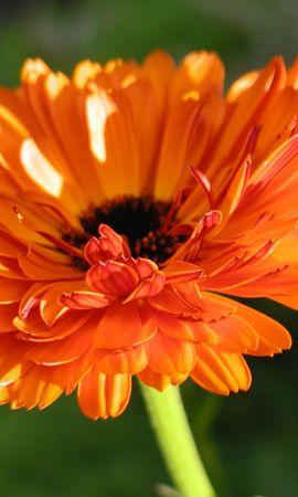 3524 descargar fondo de pantalla Plantas, Flores: protectores de pantalla e imágenes gratis