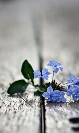 44854 télécharger le fond d'écran Plantes, Fleurs, Objets - économiseurs d'écran et images gratuitement
