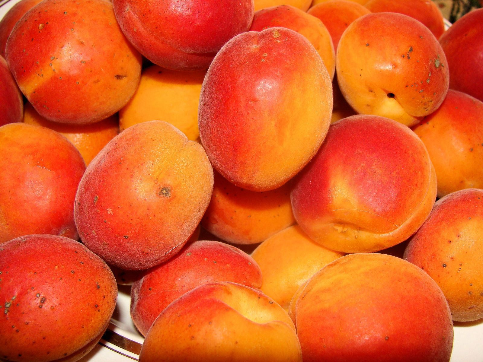 57026 Screensavers and Wallpapers Fruits for phone. Download Food, Peaches, Apricots, Ripe, Tasty, Delicious, Fruits pictures for free