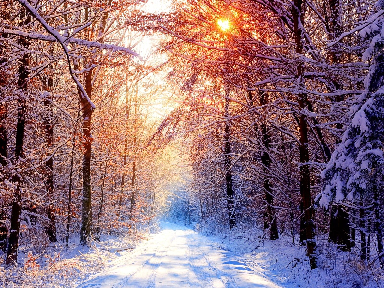 106984 Screensavers and Wallpapers Beams for phone. Download Winter, Nature, Trees, Sun, Snow, Shine, Light, Beams, Rays, Road, Forest, Alley pictures for free