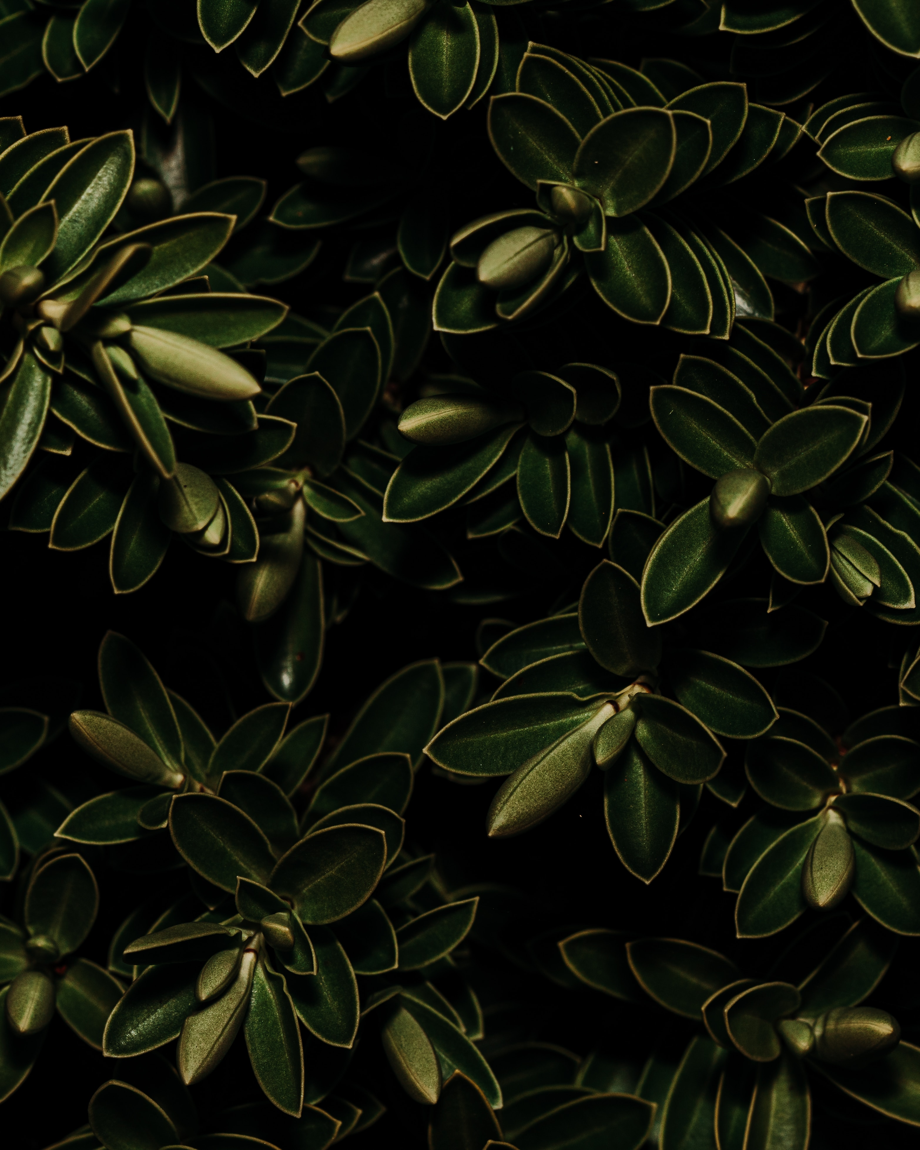 102461 Hintergrundbild herunterladen Pflanzen, Blätter, Makro, Dunkel - Bildschirmschoner und Bilder kostenlos