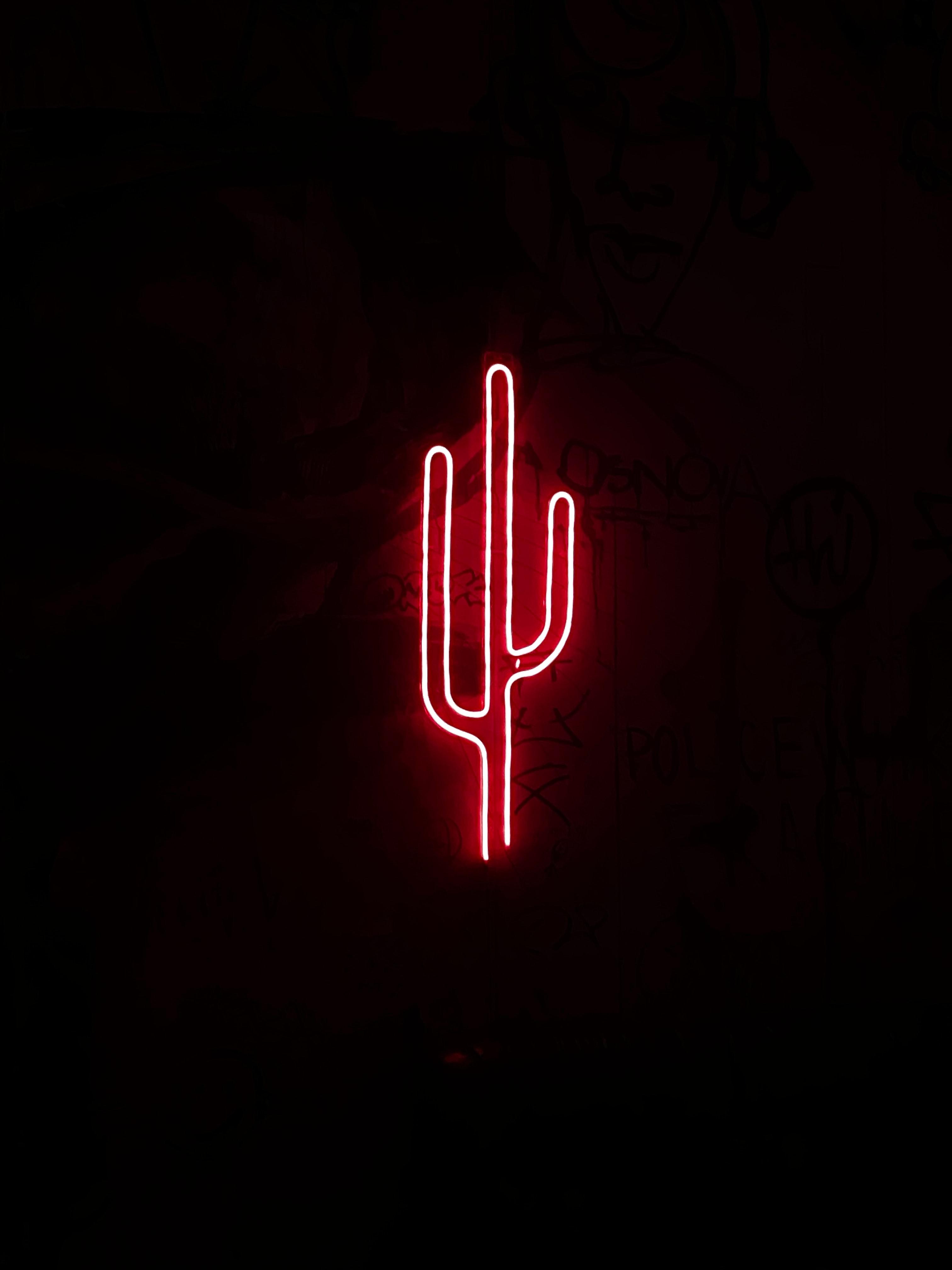 117233 descargar fondo de pantalla Oscuro, Cactus, Cacto, Neón, Brillar, Luz, Oscuridad: protectores de pantalla e imágenes gratis