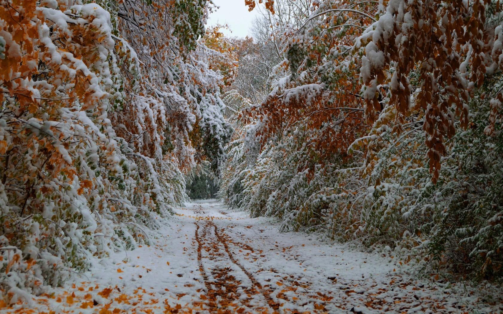 20713 скачать обои Пейзаж, Деревья, Дороги, Осень, Снег - заставки и картинки бесплатно