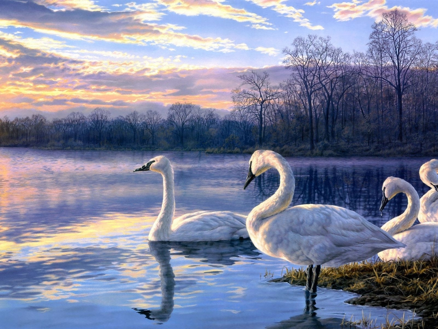 27645 download wallpaper Animals, Birds, Swans screensavers and pictures for free