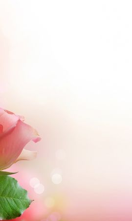 20139 download wallpaper Plants, Flowers, Background, Roses screensavers and pictures for free