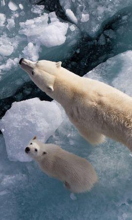 38327 baixar papel de parede Animais, Bears - protetores de tela e imagens gratuitamente