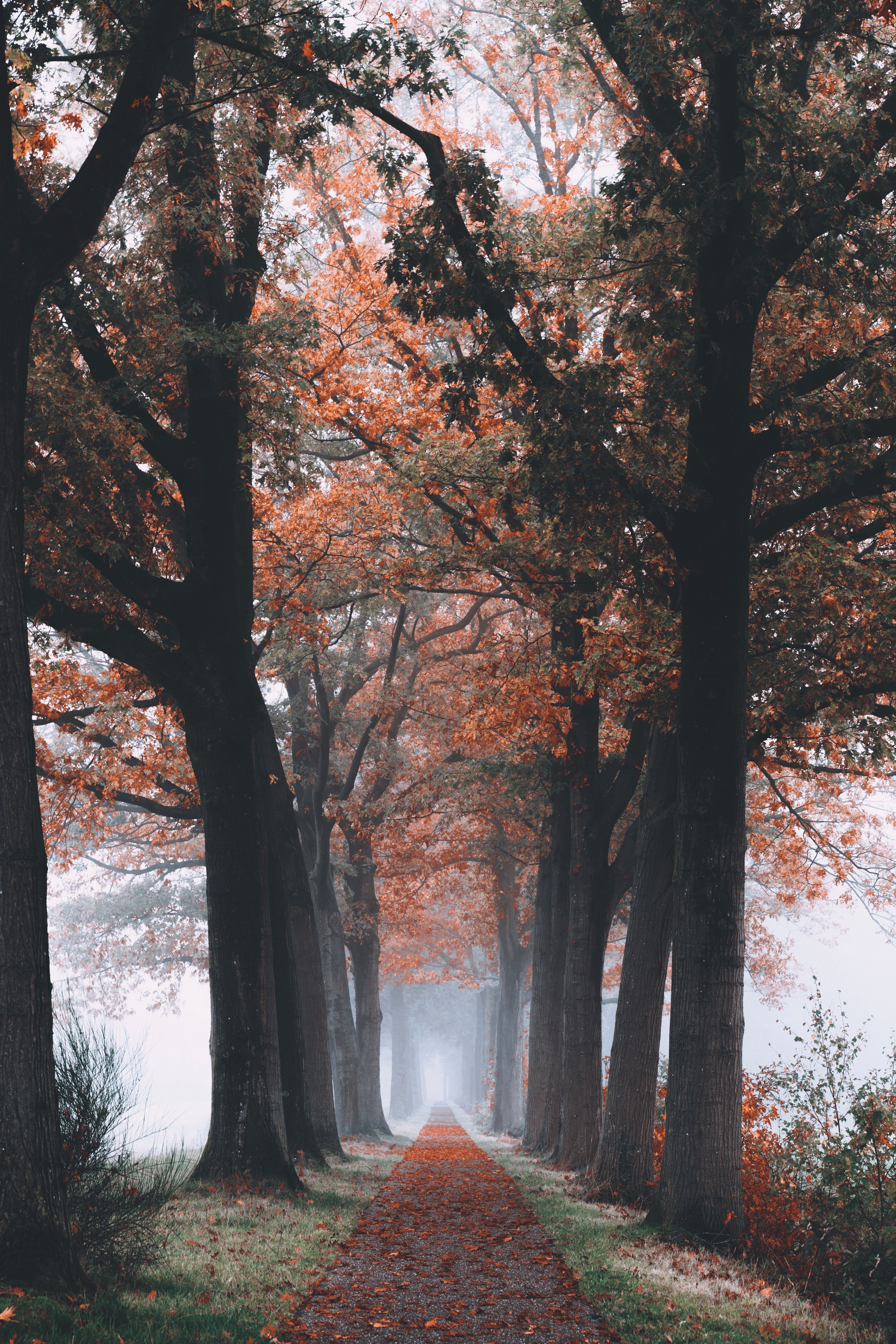 74397 Screensavers and Wallpapers Foliage for phone. Download Nature, Trees, Autumn, Forest, Path, Foliage pictures for free