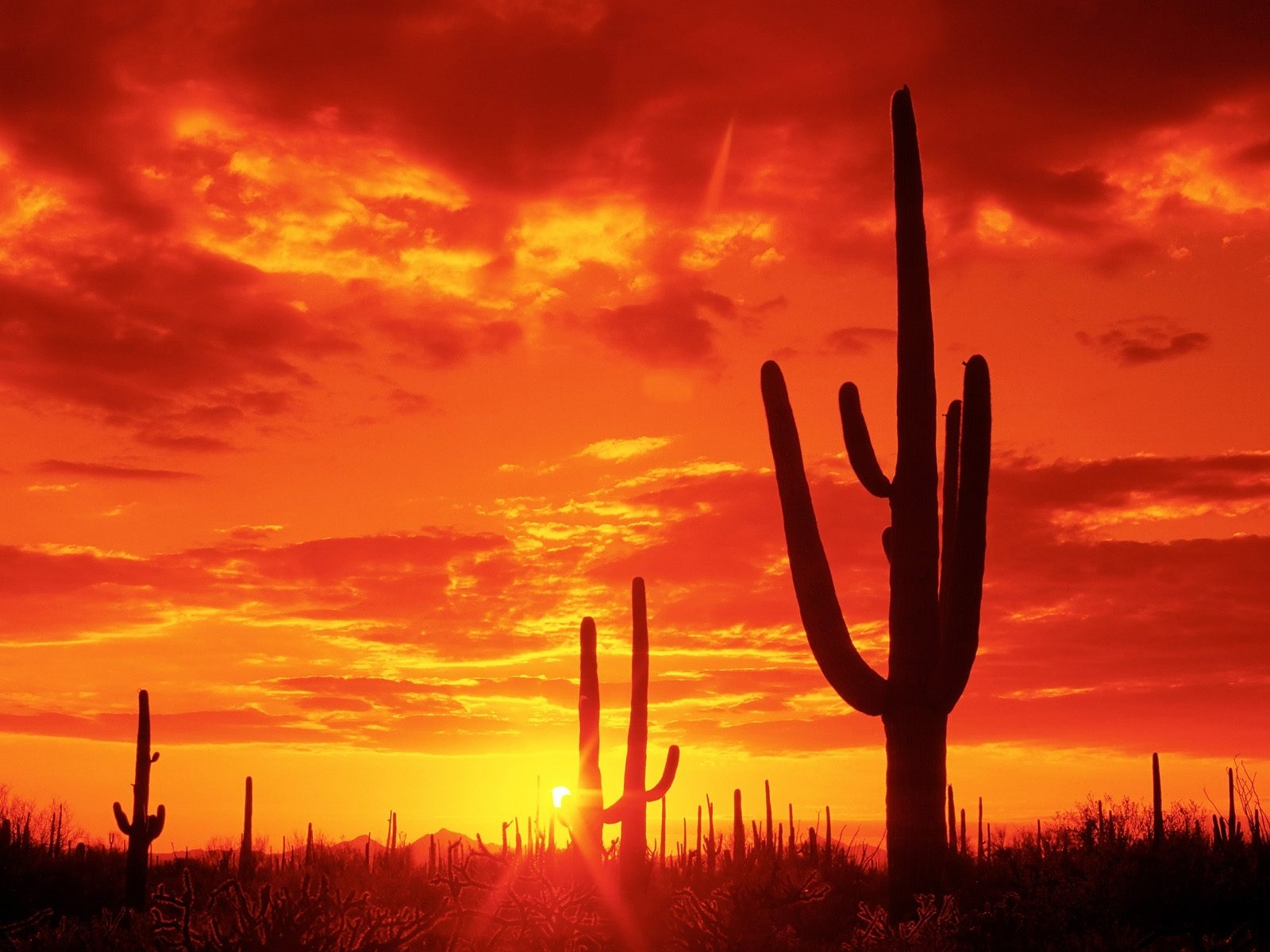 5776 download wallpaper Landscape, Cactuses, Sunset, Sky, Sun screensavers and pictures for free