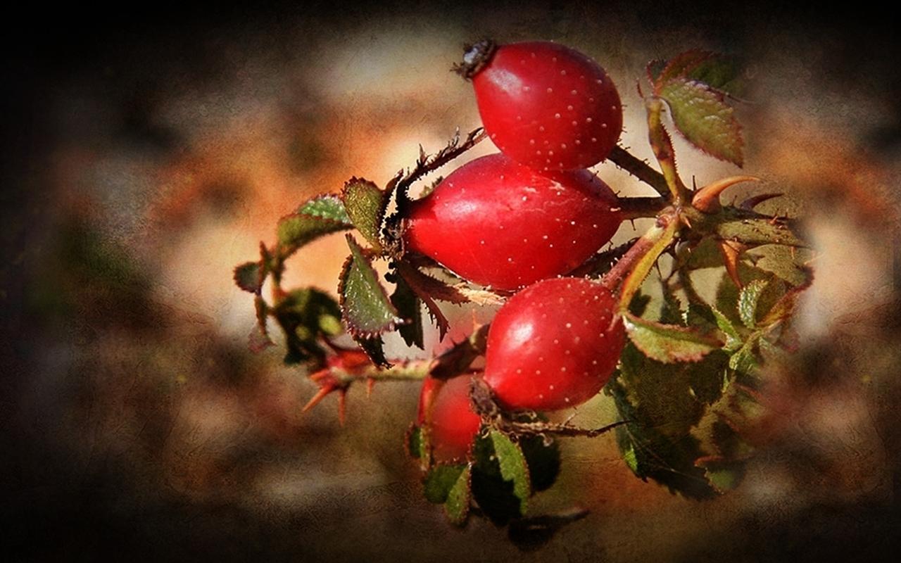 41627 Hintergrundbild herunterladen Pflanzen, Briar - Bildschirmschoner und Bilder kostenlos