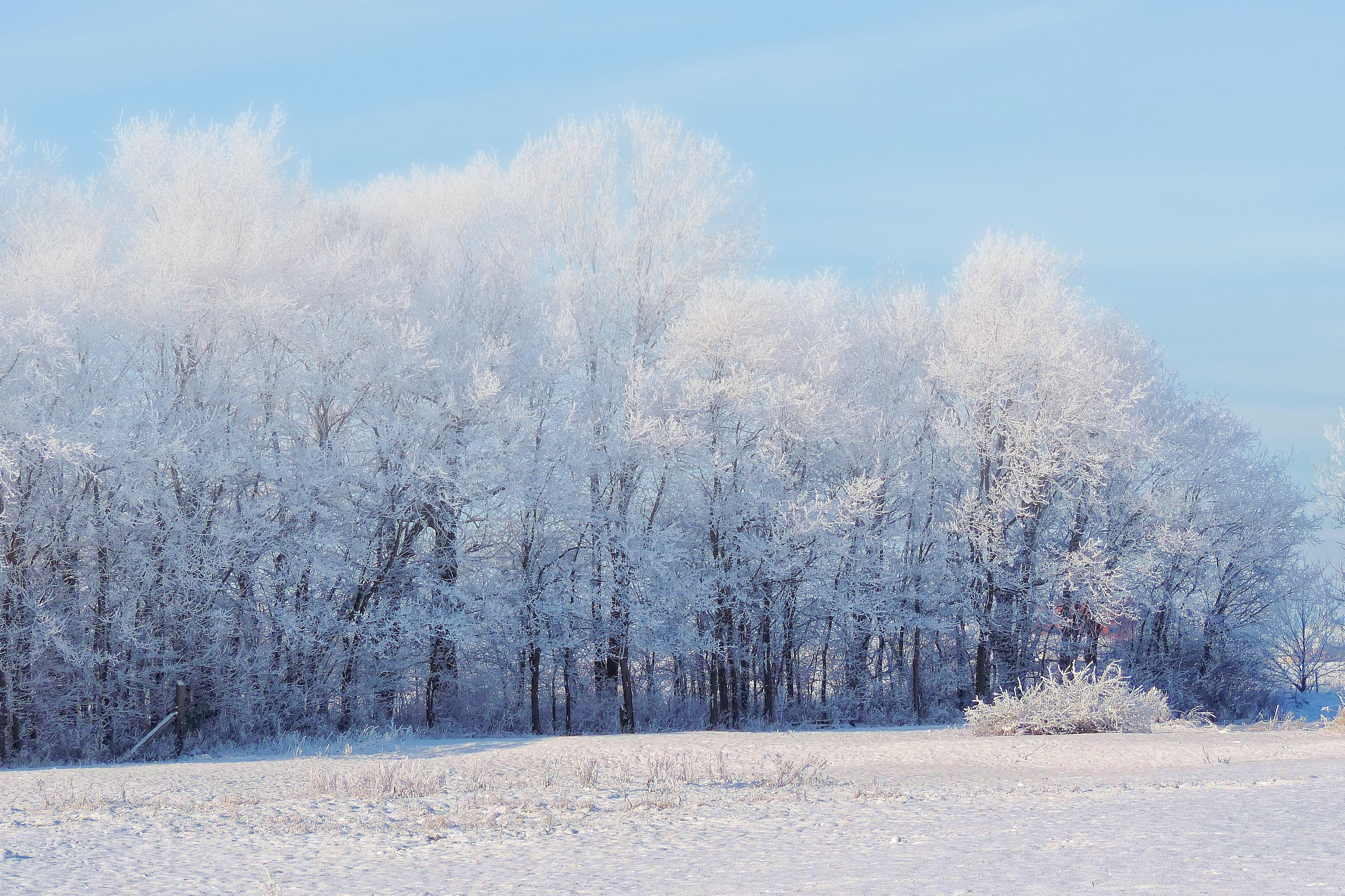81895 descargar fondo de pantalla Naturaleza, Bosque, Invierno, Nieve, Árboles, Paisaje: protectores de pantalla e imágenes gratis