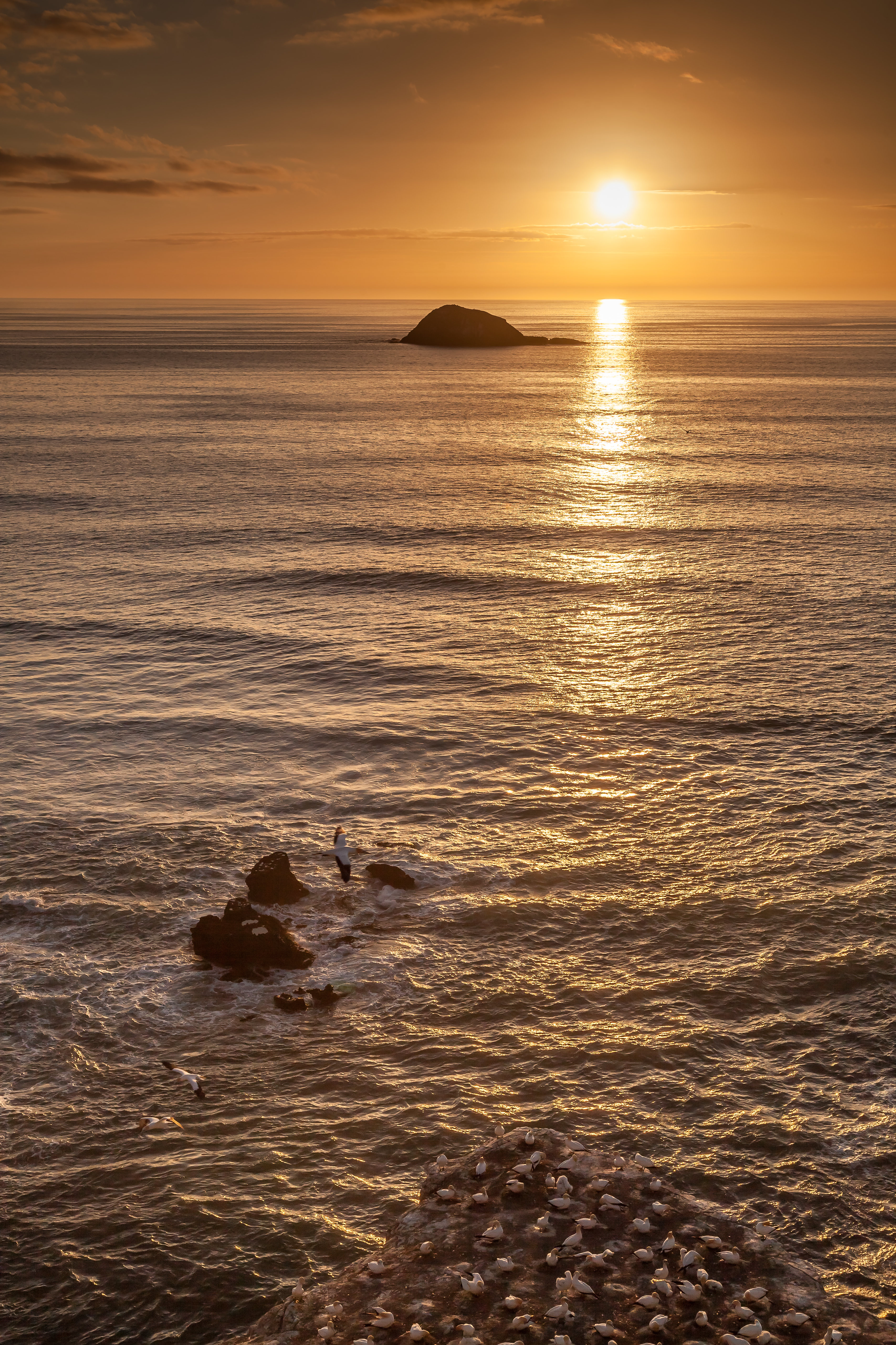84161 download wallpaper Nature, Rocks, Sunset, Horizon, Seagulls screensavers and pictures for free