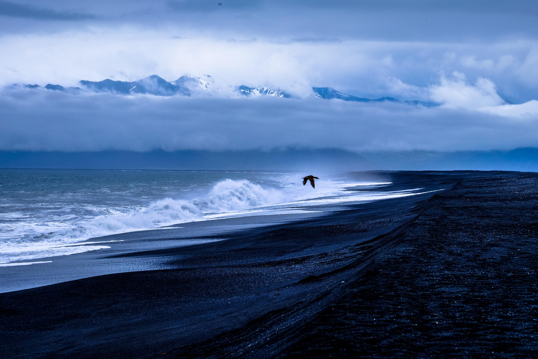 82024 Salvapantallas y fondos de pantalla Mar en tu teléfono. Descarga imágenes de Naturaleza, Pájaro, Mar, Vuelo, Navegar, Surfear gratis