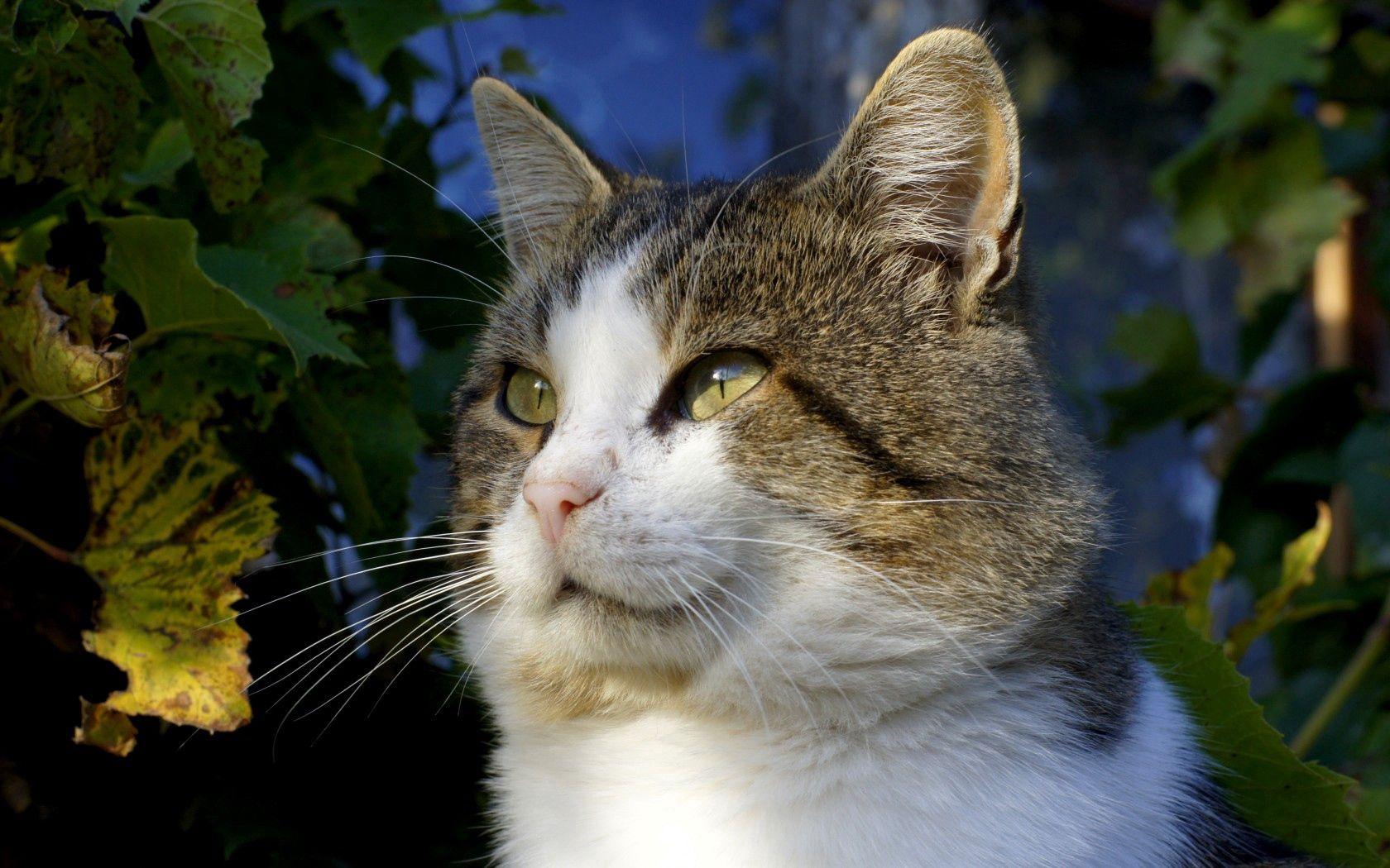 143290 скачать обои Животные, Кот, Зеленый, Листья, Осень, Взгляд, Глаза, Усы - заставки и картинки бесплатно
