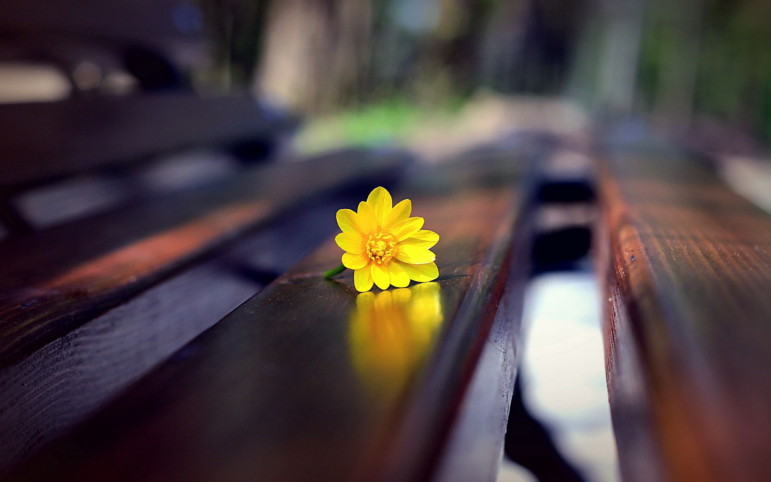 133451 Screensavers and Wallpapers Bench for phone. Download Flower, Macro, Bench pictures for free