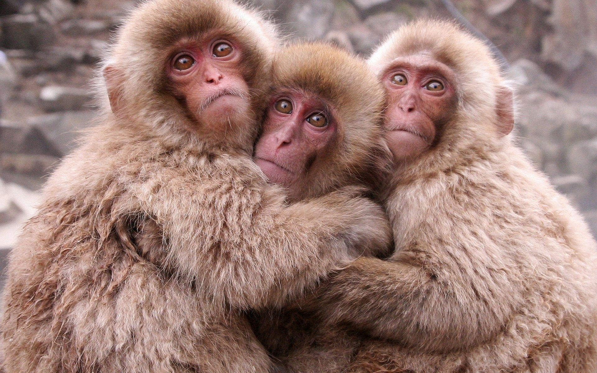 60657 Screensavers and Wallpapers Monkeys for phone. Download Animals, Monkeys, Monkey, Toddlers, Kids, Bask pictures for free