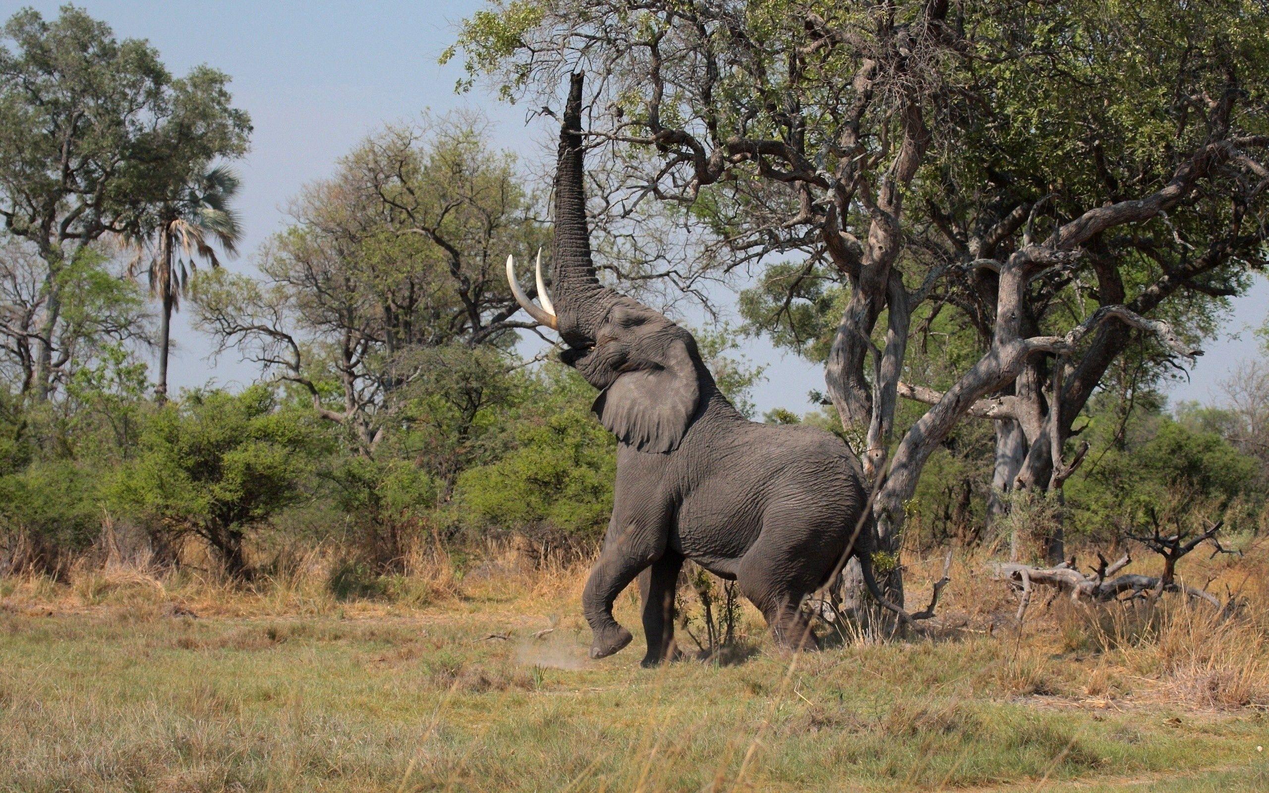 124543 обои 720x1280 на телефон бесплатно, скачать картинки Животные, Деревья, Трава, Слон 720x1280 на мобильный