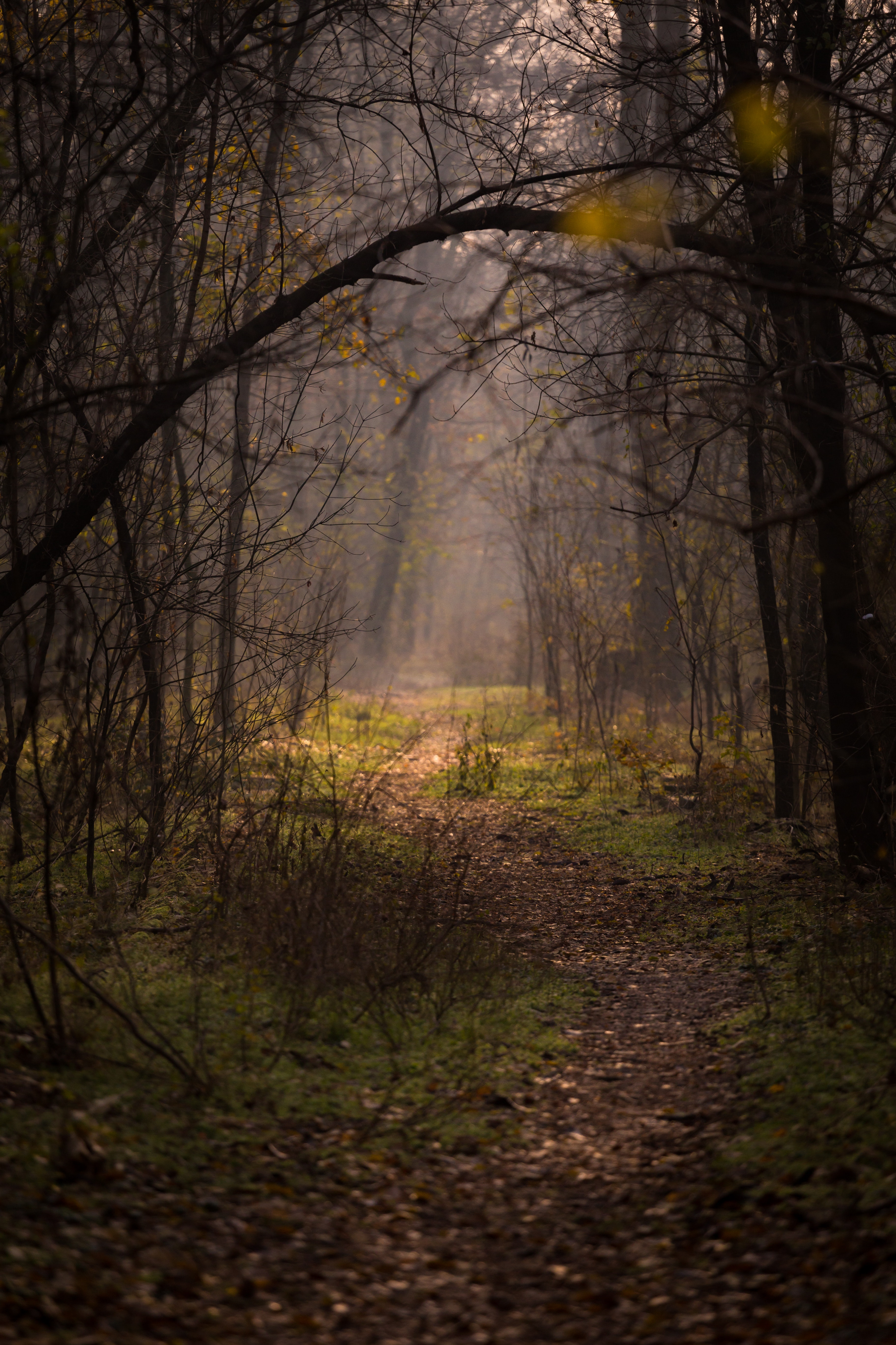 152422 download wallpaper Nature, Trees, Forest, Fog, Branches, Path screensavers and pictures for free