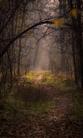 152422 télécharger le fond d'écran Nature, Forêt, Brouillard, Arbres, Branches, Chemin - économiseurs d'écran et images gratuitement