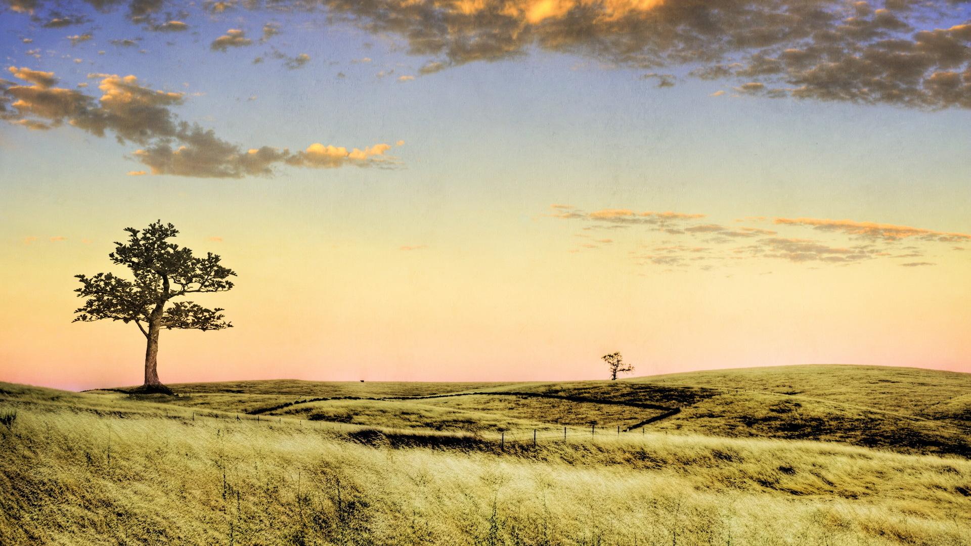 27028 скачать обои Пейзаж, Деревья, Поля, Небо, Облака - заставки и картинки бесплатно
