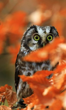 150117 download wallpaper Animals, Owl, Bird, Sight, Opinion, Branch, Leaves screensavers and pictures for free