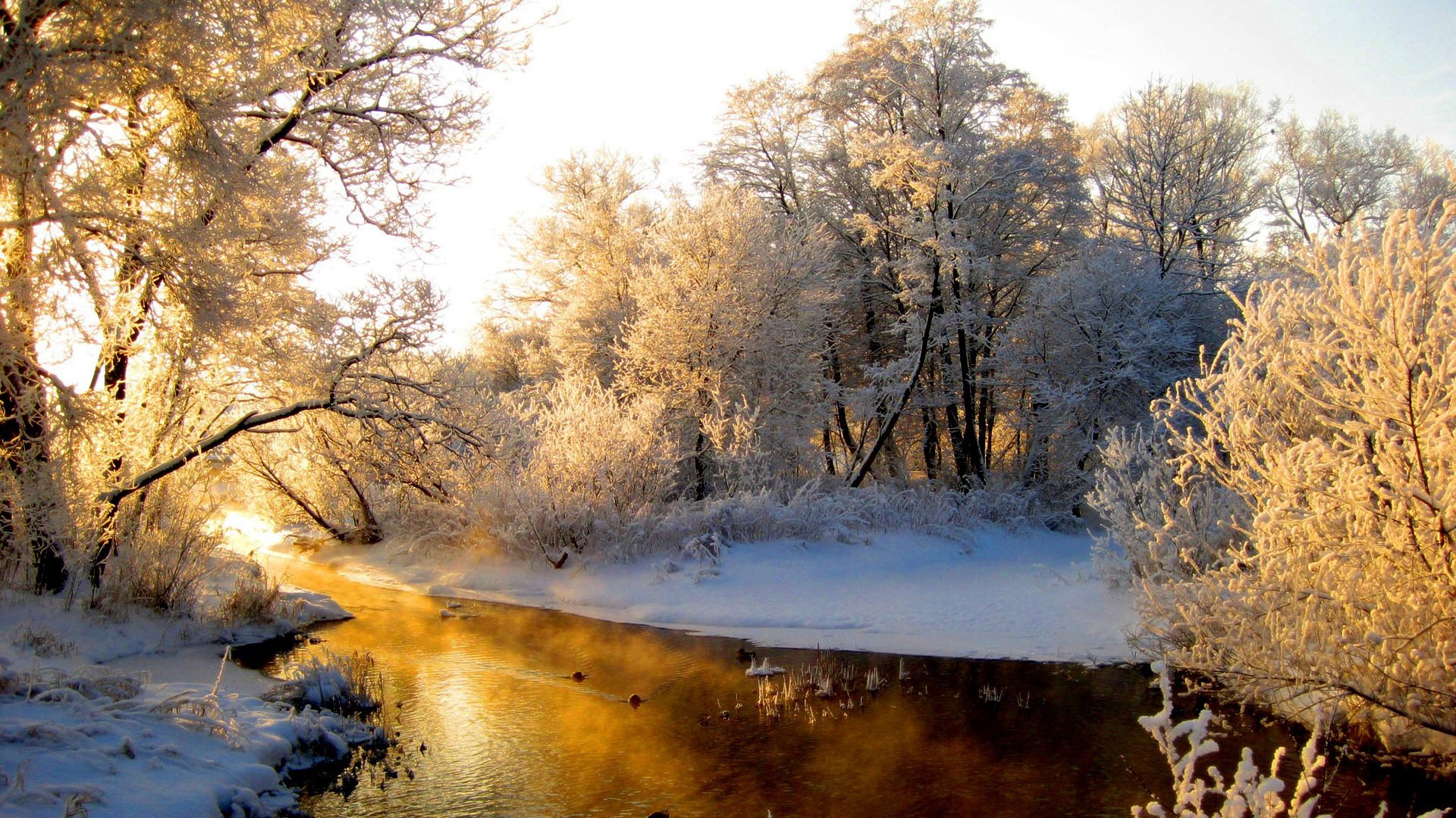 106427 Hintergrundbild herunterladen Winterreifen, Natur, Flüsse, Reflexion, Scheinen, Licht, Wald, Frost, Rauhreif, Graue Haare, Graue Seradiebe - Bildschirmschoner und Bilder kostenlos