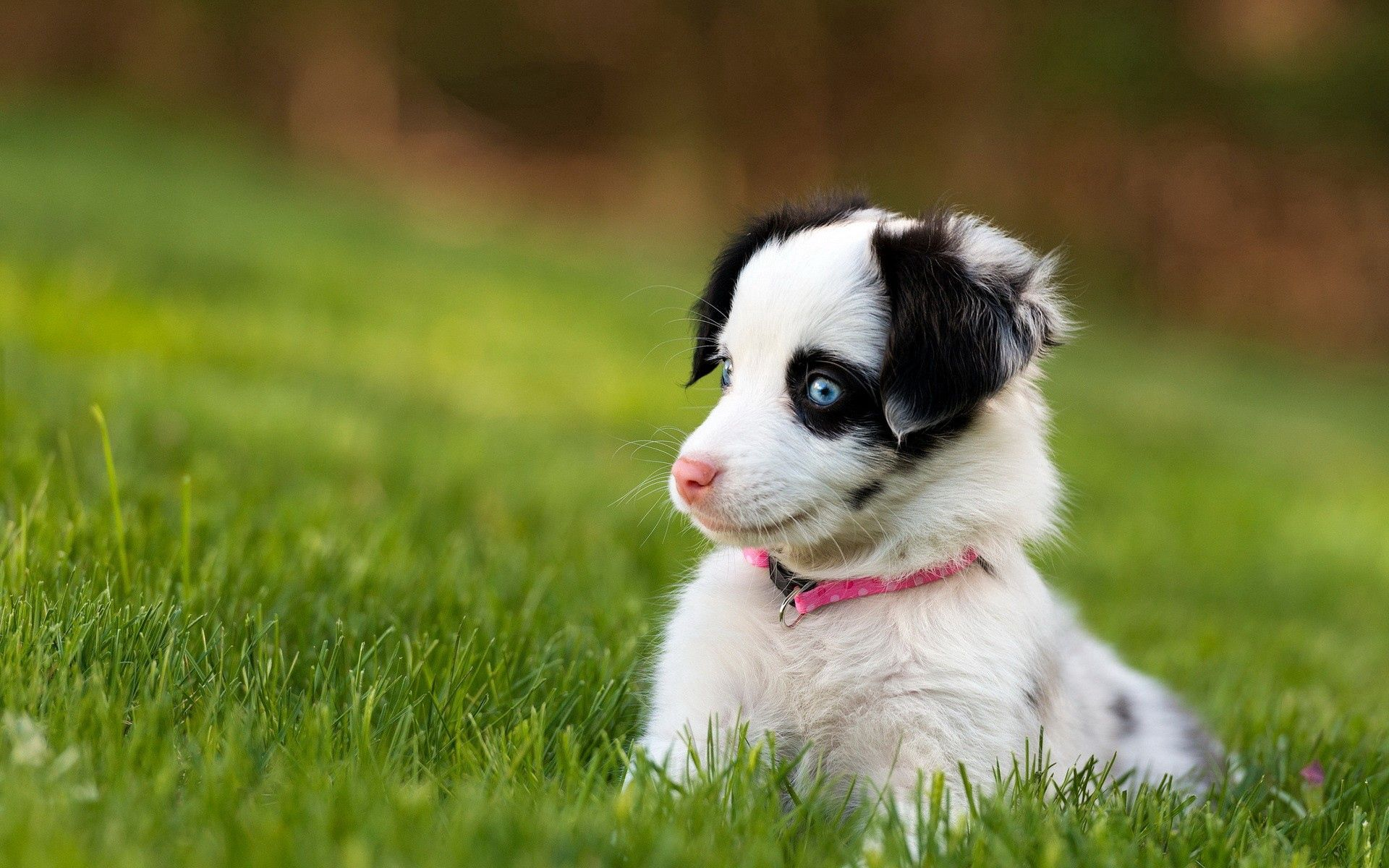 130397 Screensavers and Wallpapers Beautiful for phone. Download Animals, Dog, Beautiful, Sight, Opinion, Puppy, Surprise, Astonishment pictures for free