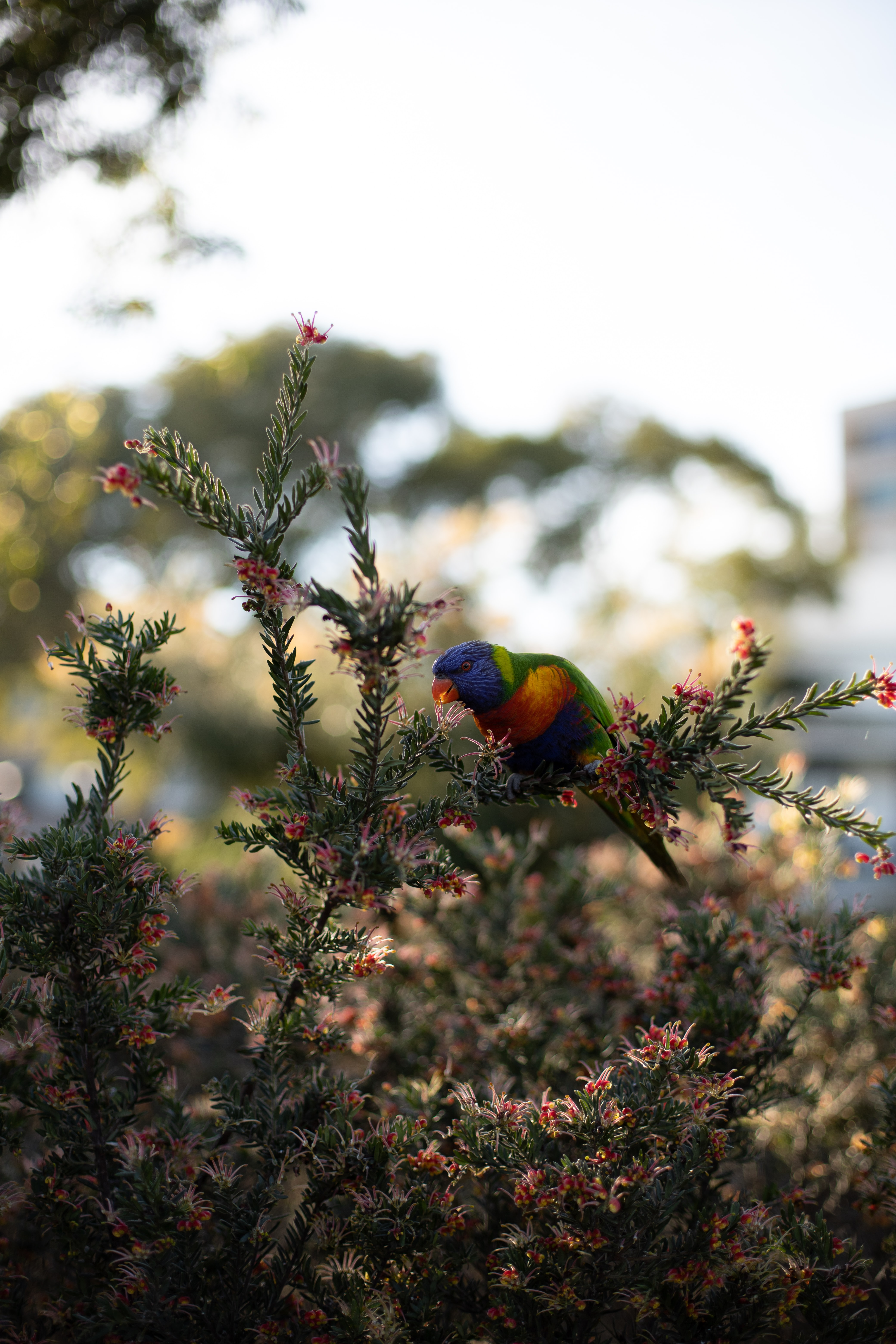 124315 download wallpaper Animals, Parrots, Bird, Bright, Branches, Plant screensavers and pictures for free