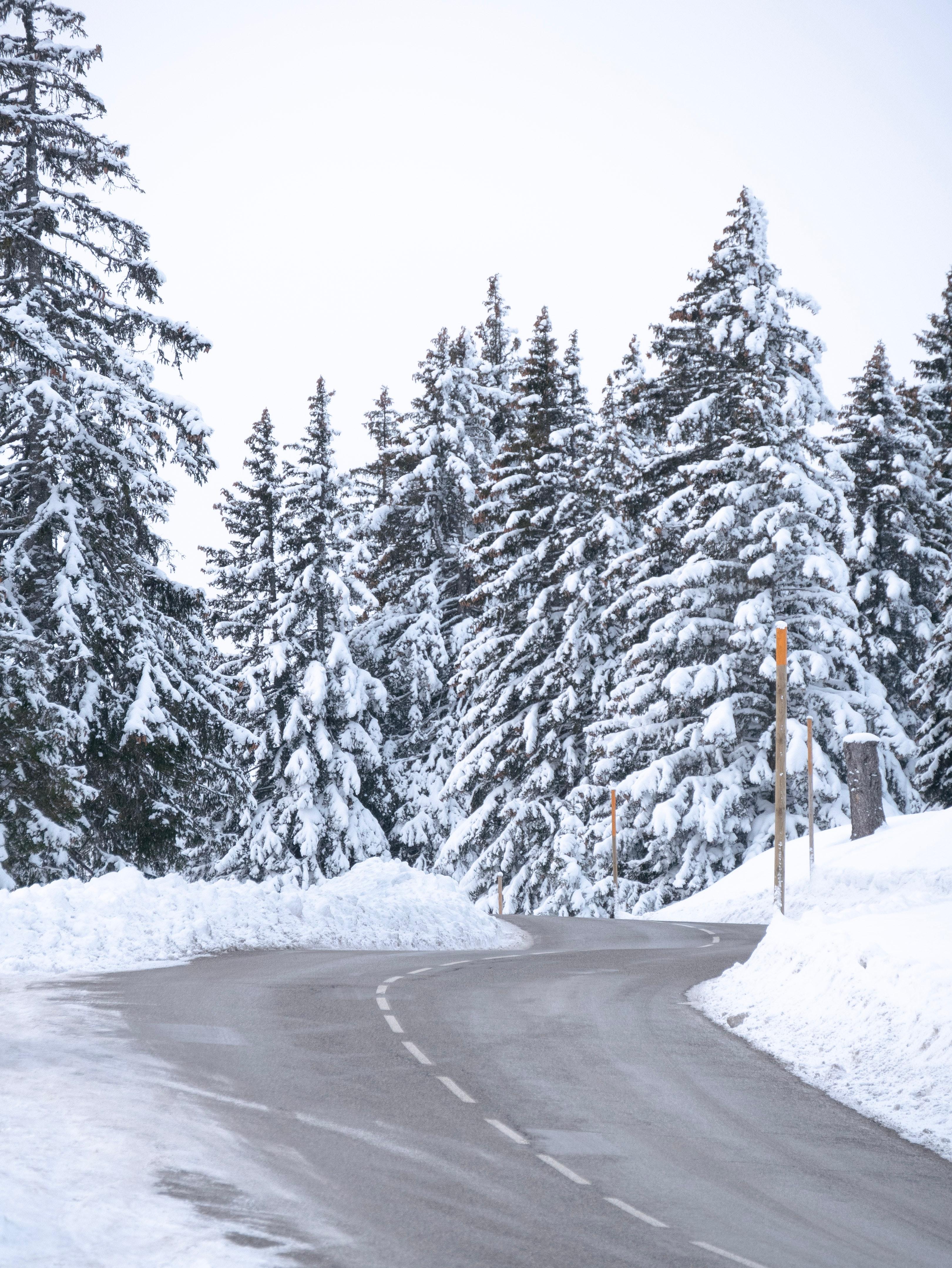 107118 скачать обои Природа, Дорога, Снег, Деревья, Зима, Елки - заставки и картинки бесплатно