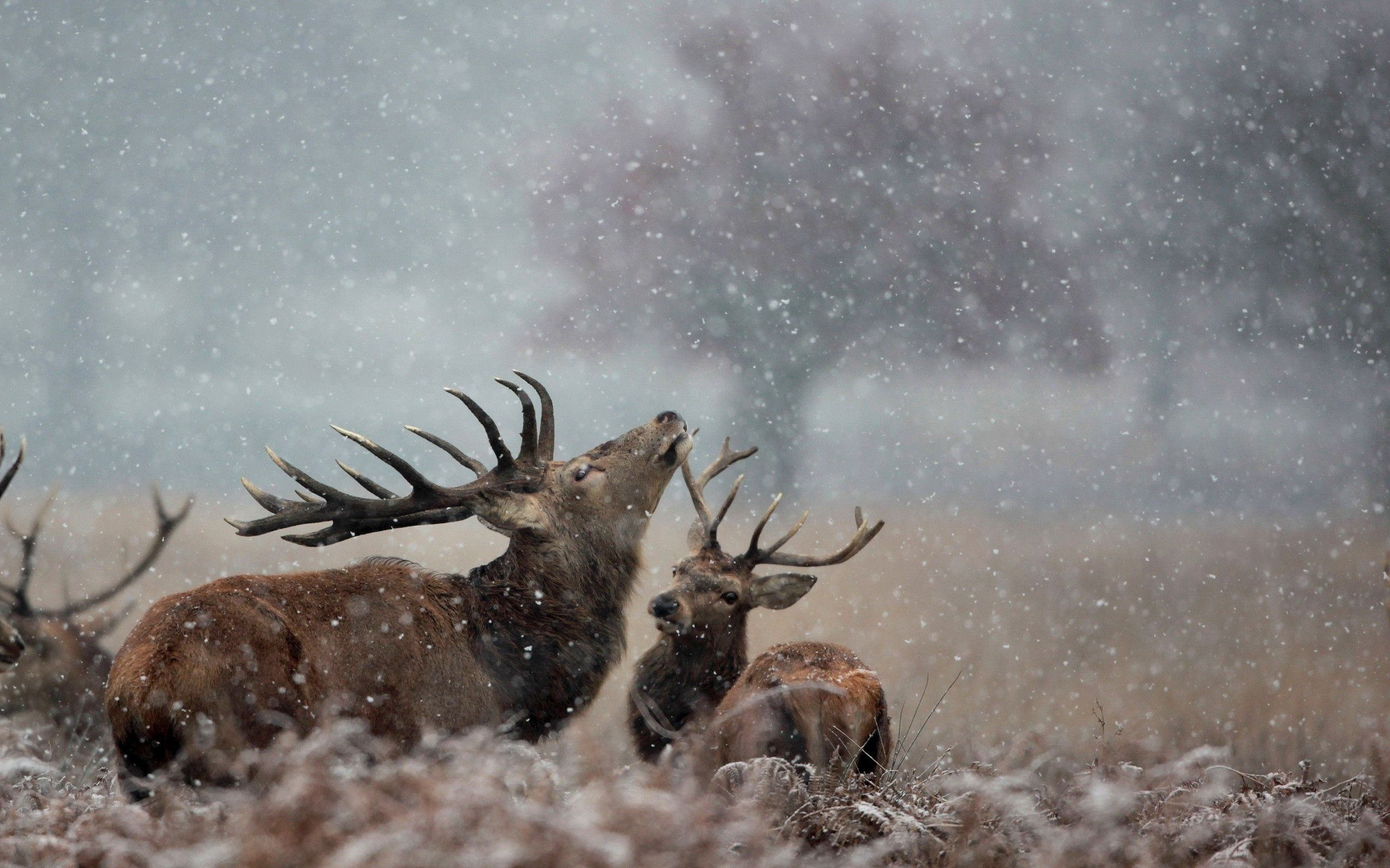 84682 download wallpaper Animals, Deers, Couple, Pair, Grass screensavers and pictures for free