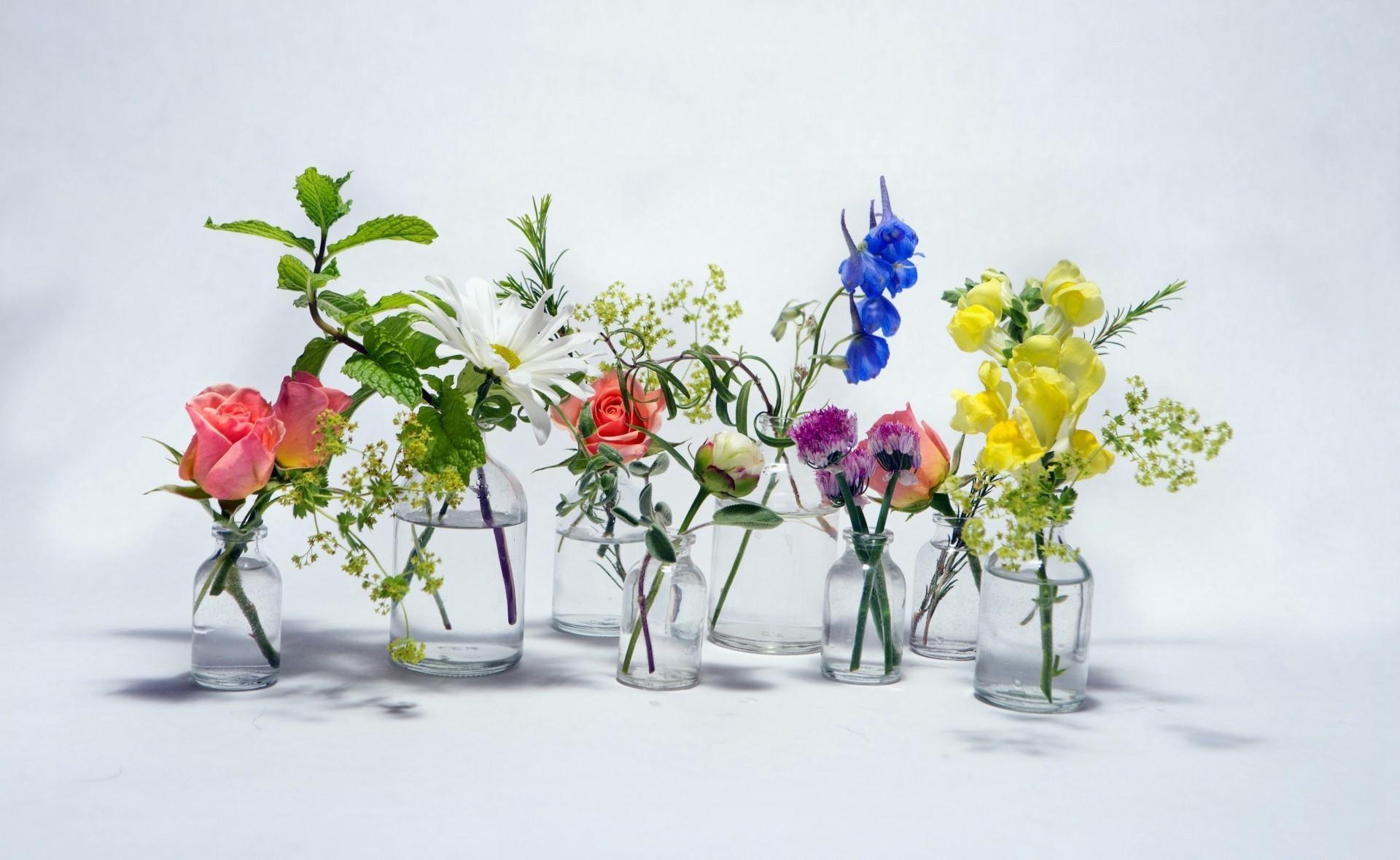 115317 скачать обои Цветы, Ромашка, Колокольчики, Банки, Вода, Розы - заставки и картинки бесплатно