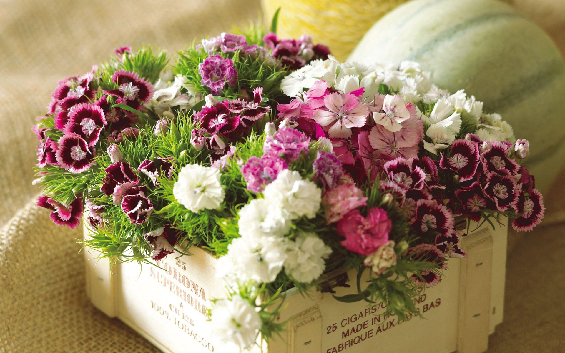 131104 download wallpaper Flowers, Carnations, Multicolored, Bouquet, Box, Grass screensavers and pictures for free